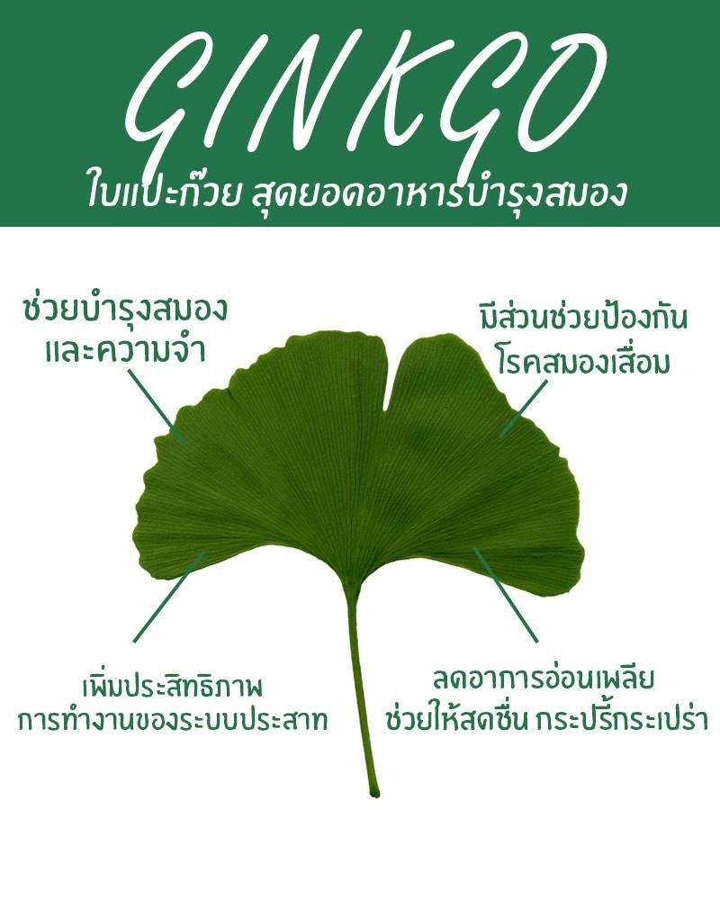 253111_05_clover_plus_ginkgo_co.jpg